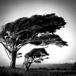 arbre_redimensionner